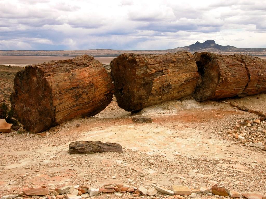 Árboles fosilizados de araucaria en la Patagonia