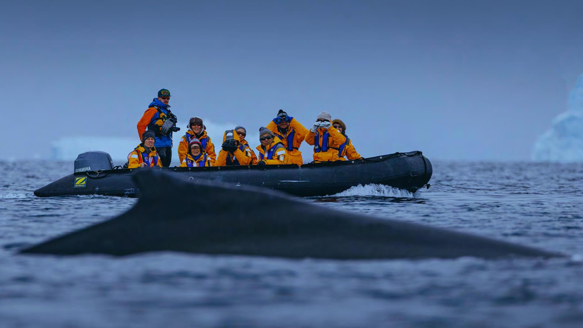 Approcher les baleines en Antarctique