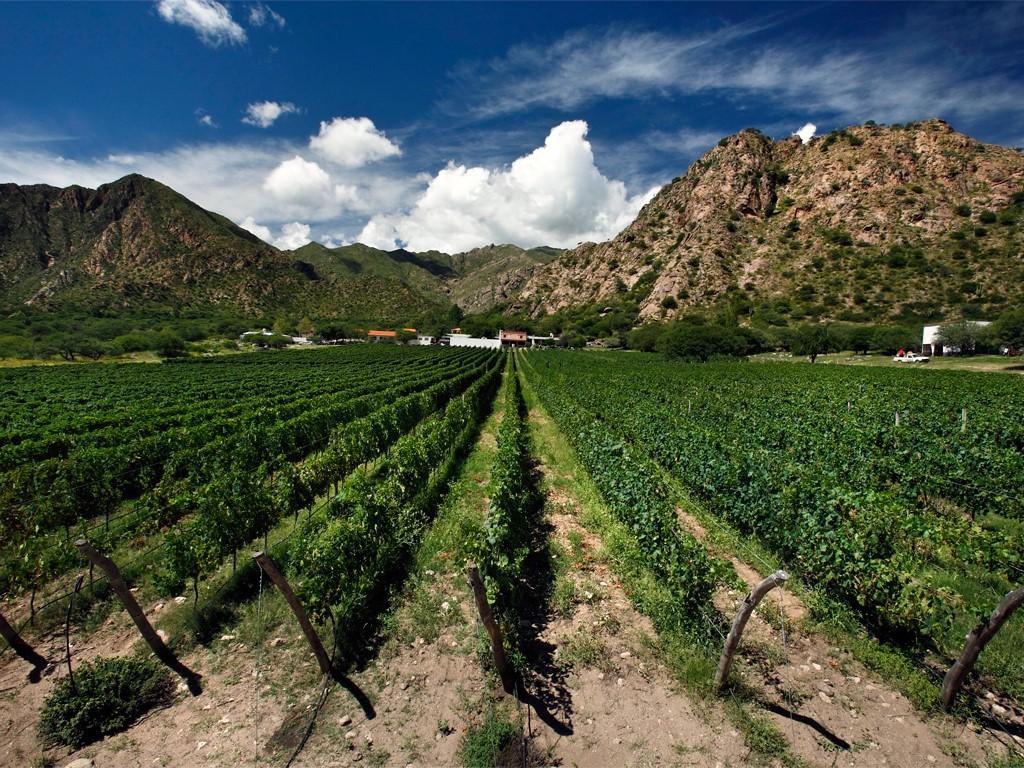 Bodegas y viñedos de Cafayate en el noroeste argentino