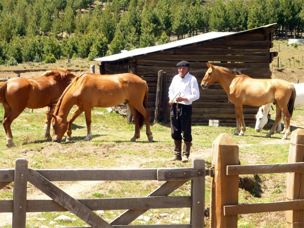 Caballos en la Estancia el Desafío, Patagonia