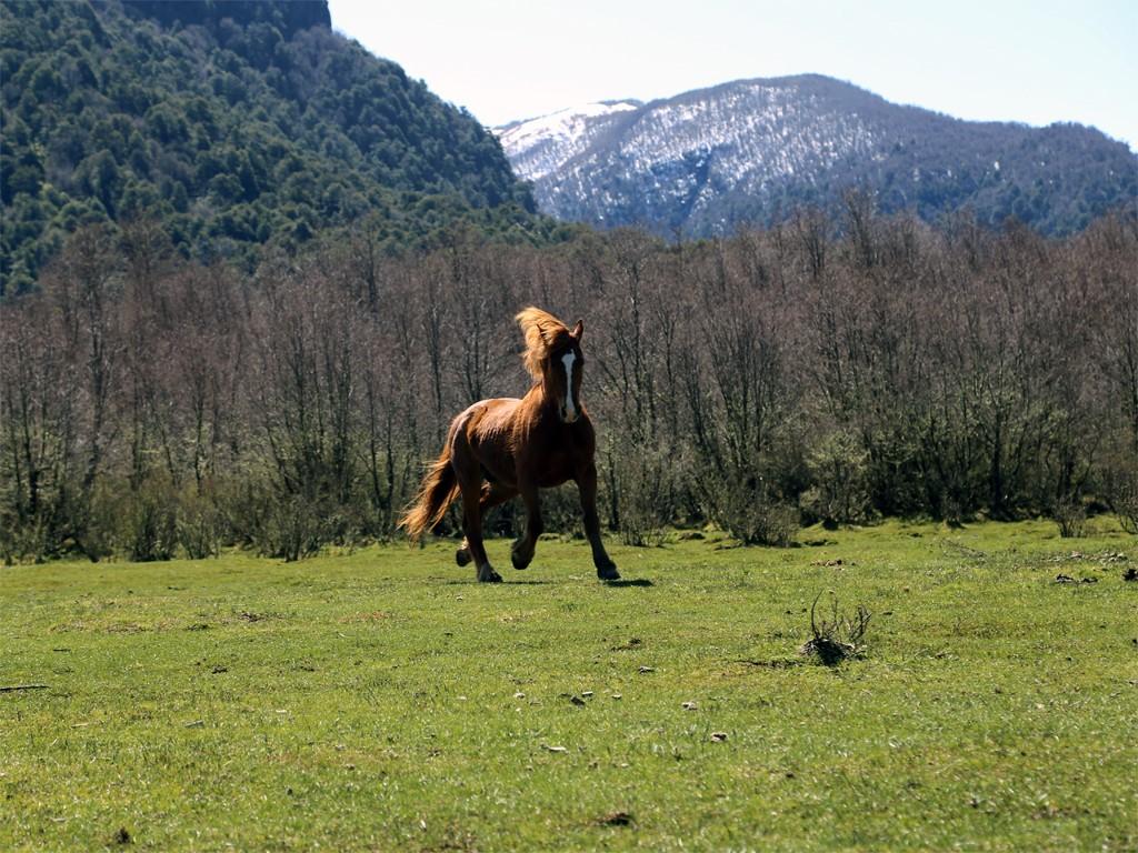 Cabalgatas en la Patagonia argentina