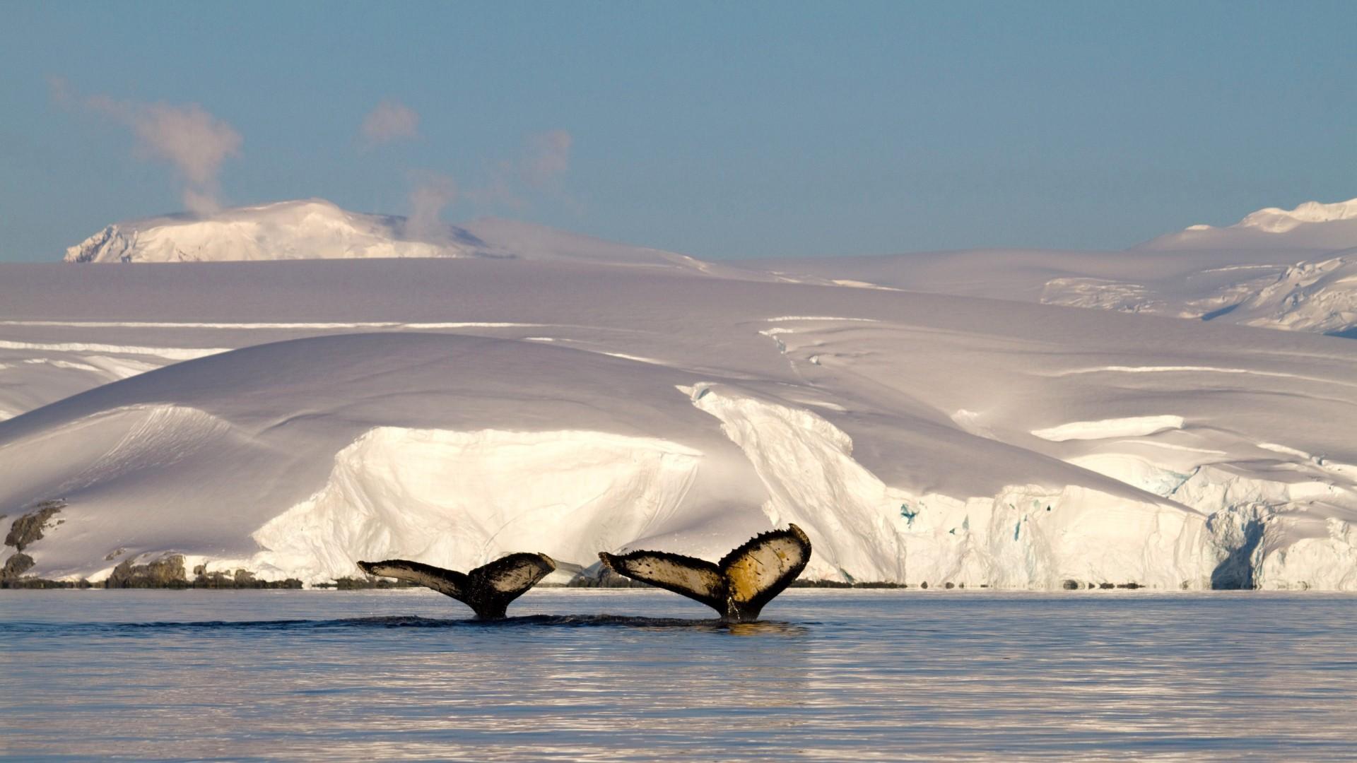 Cruceros en la Antártida chilena desde Chile