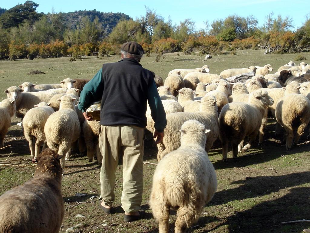 Eduardo le gaucho avec ses moutons
