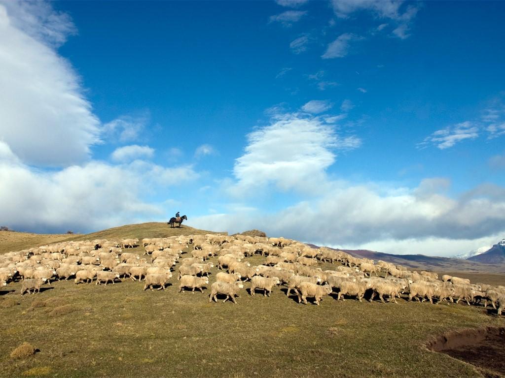 Hugo et son troupeau dans l'immensité de la Patagonie