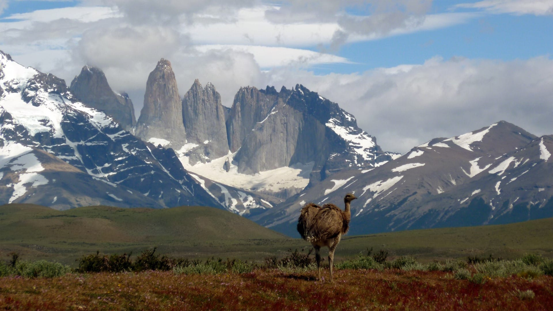 La naturaleza y fauna del Sur de la Patagonia chilena
