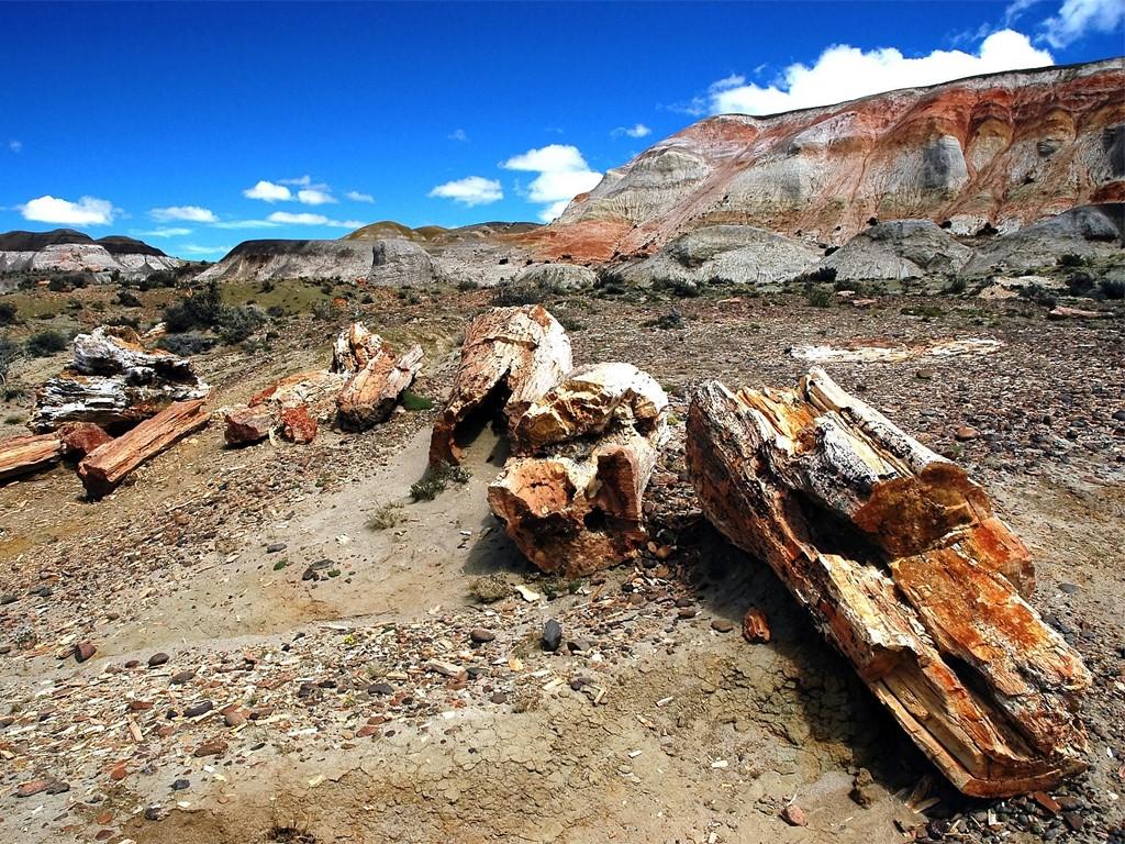 Bosques petrificados de la Patagonia