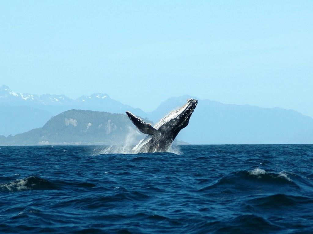 Traversant le Golfe de Penas au Chili