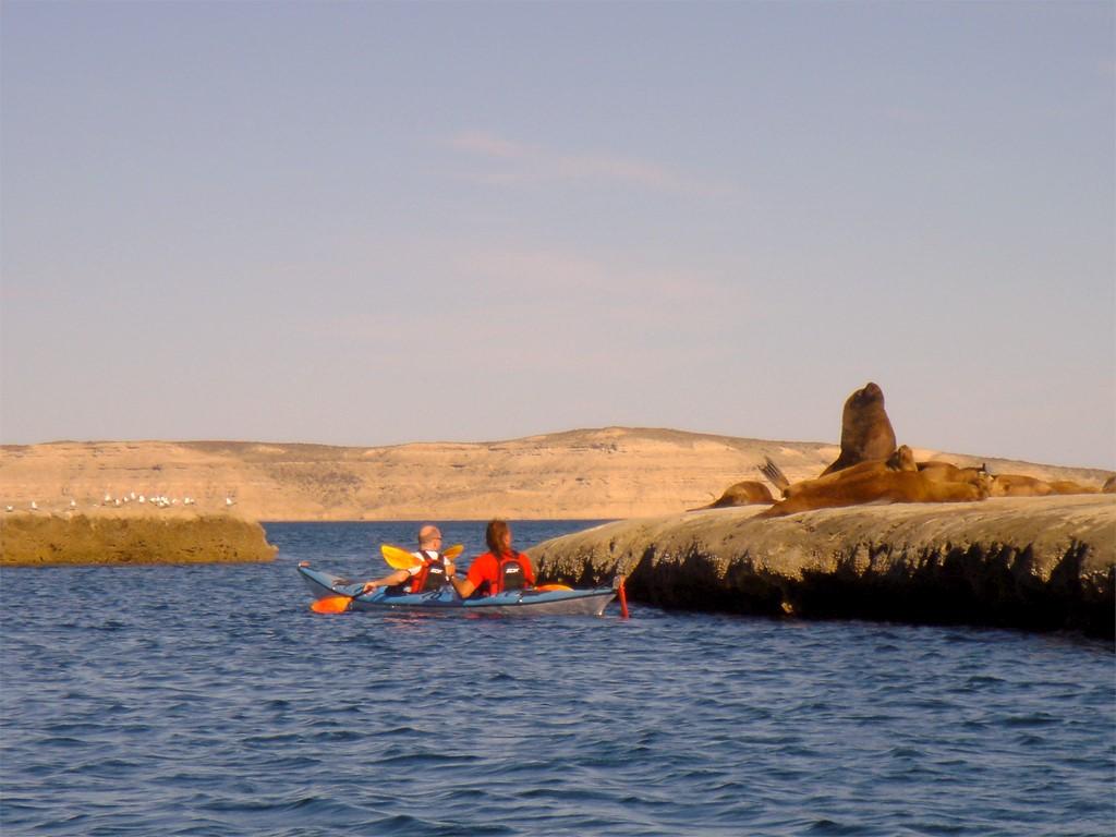 Approcher les lions de mer de Patagonie en kayak