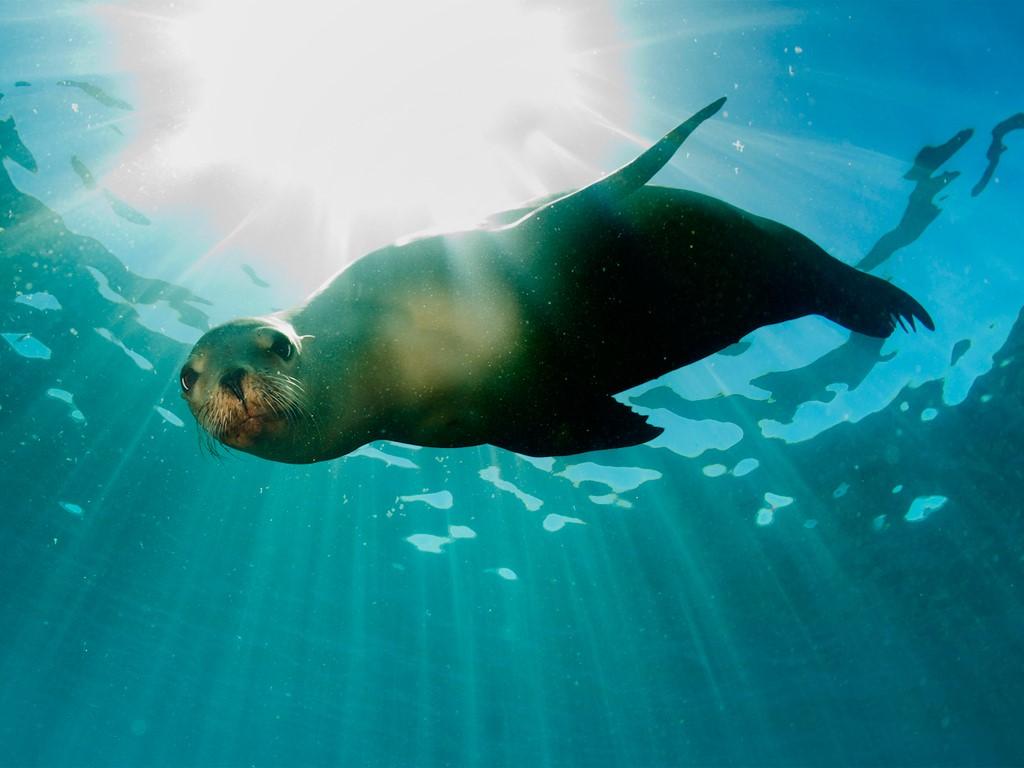Otaries et lions de mer en Patagonie