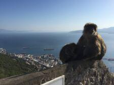 Sur le Rocher de Gibraltar