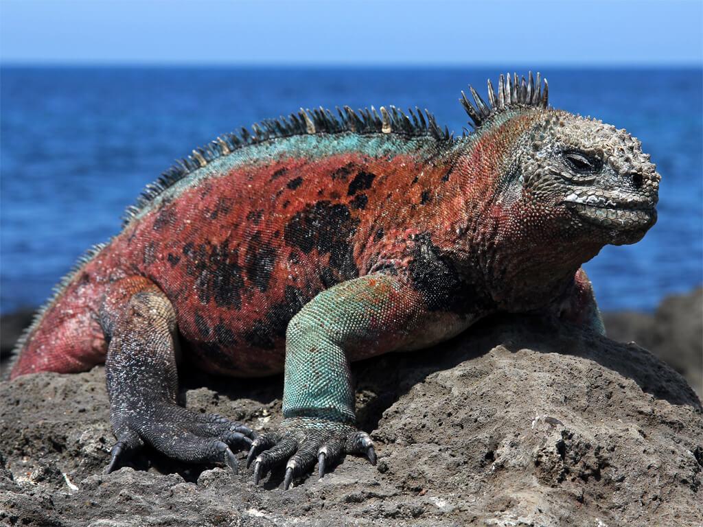 Les Îles Galápagos ce sont les perles de l'Équateur