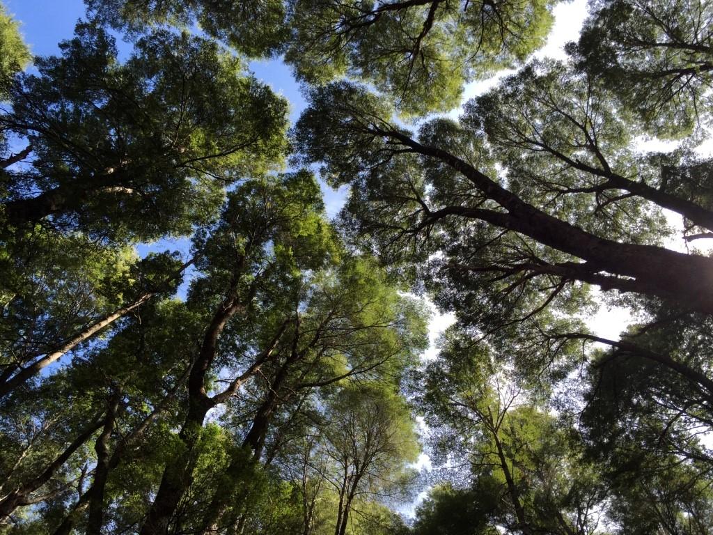 Marche méditative en forêt dans le parc National Nahuel Huapi