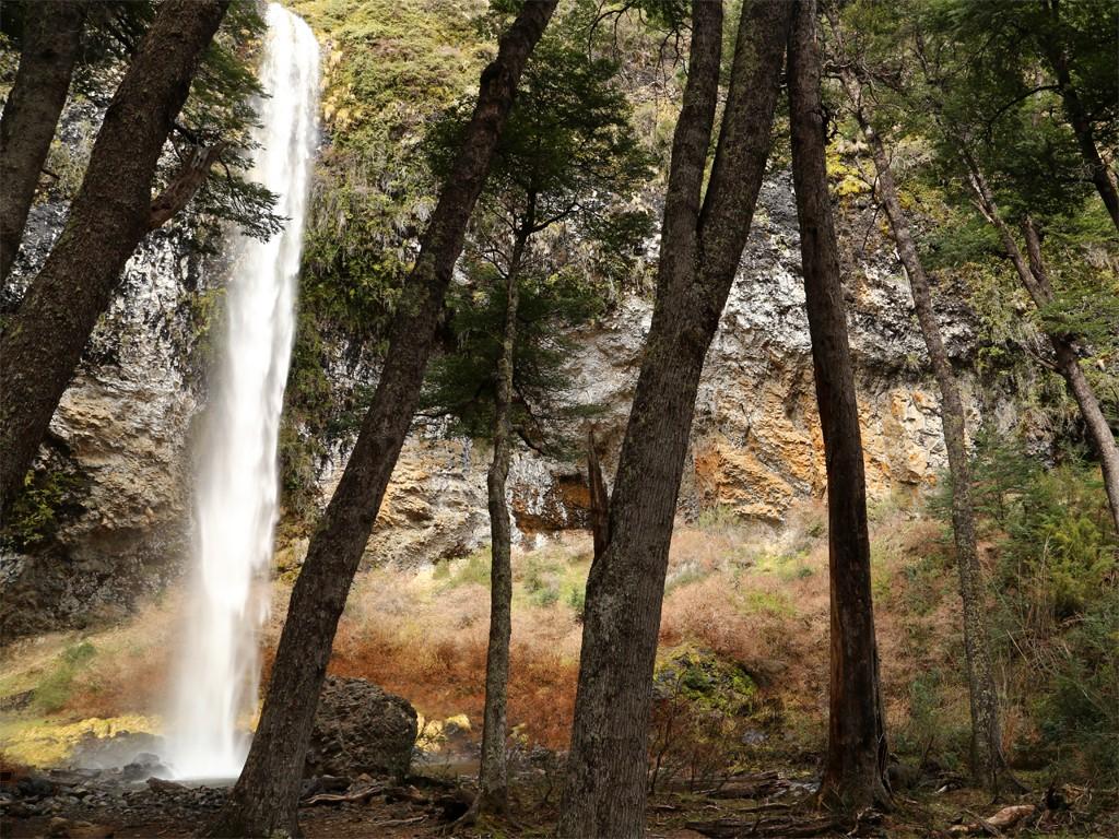 Marche méditative en forêt de Patagonie