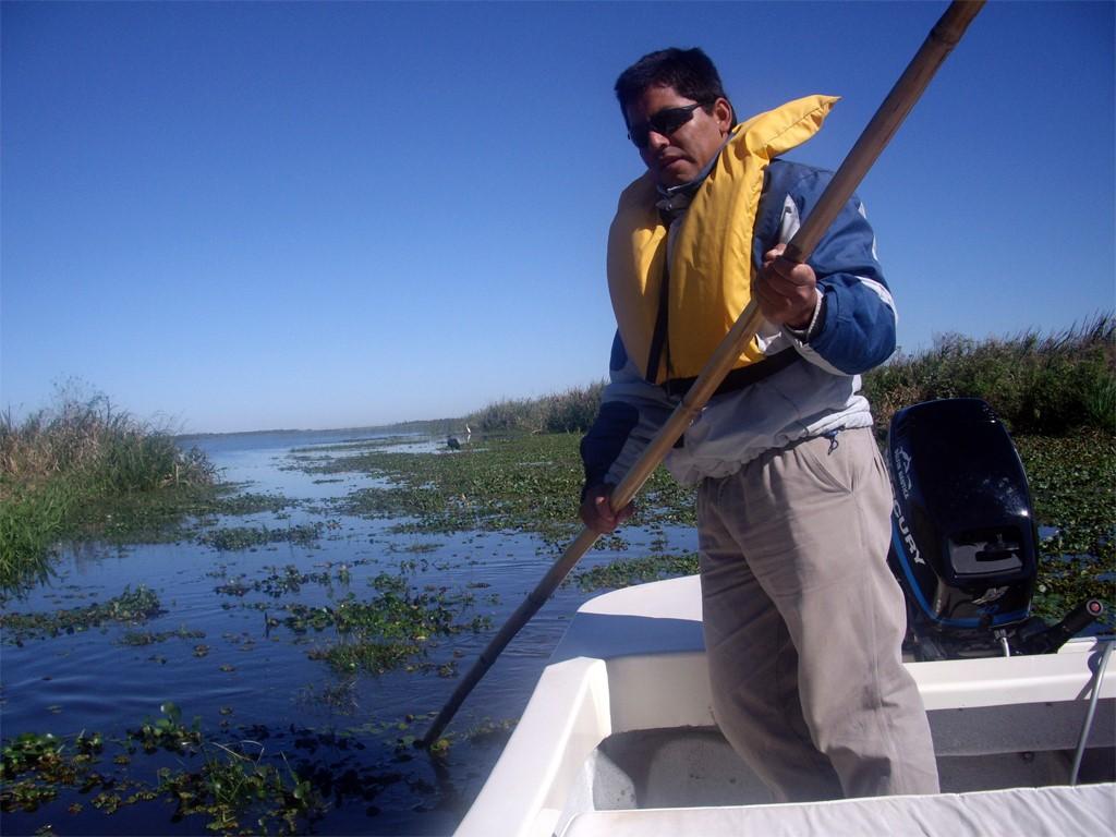 Maximo sur les étangs Ibera