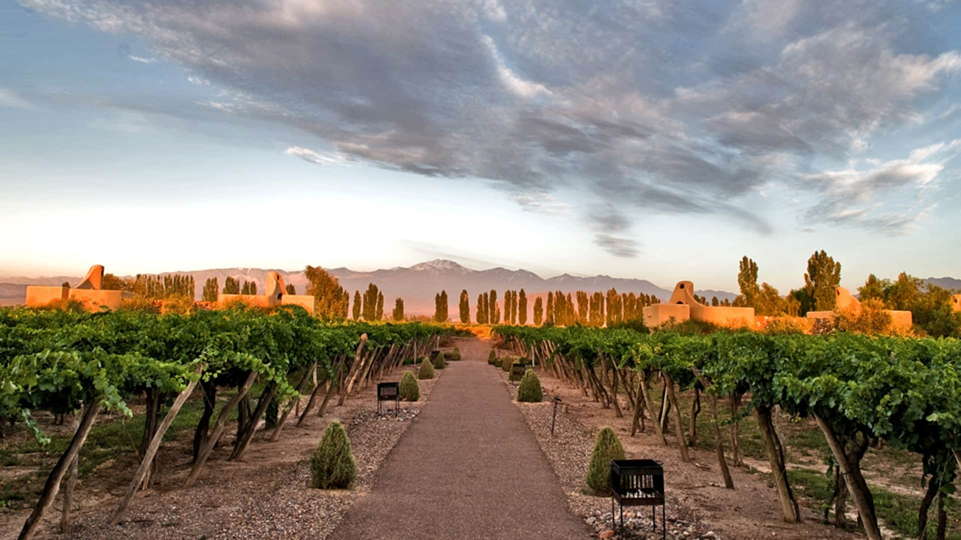 Les vignobles de Mendoza en Argentine