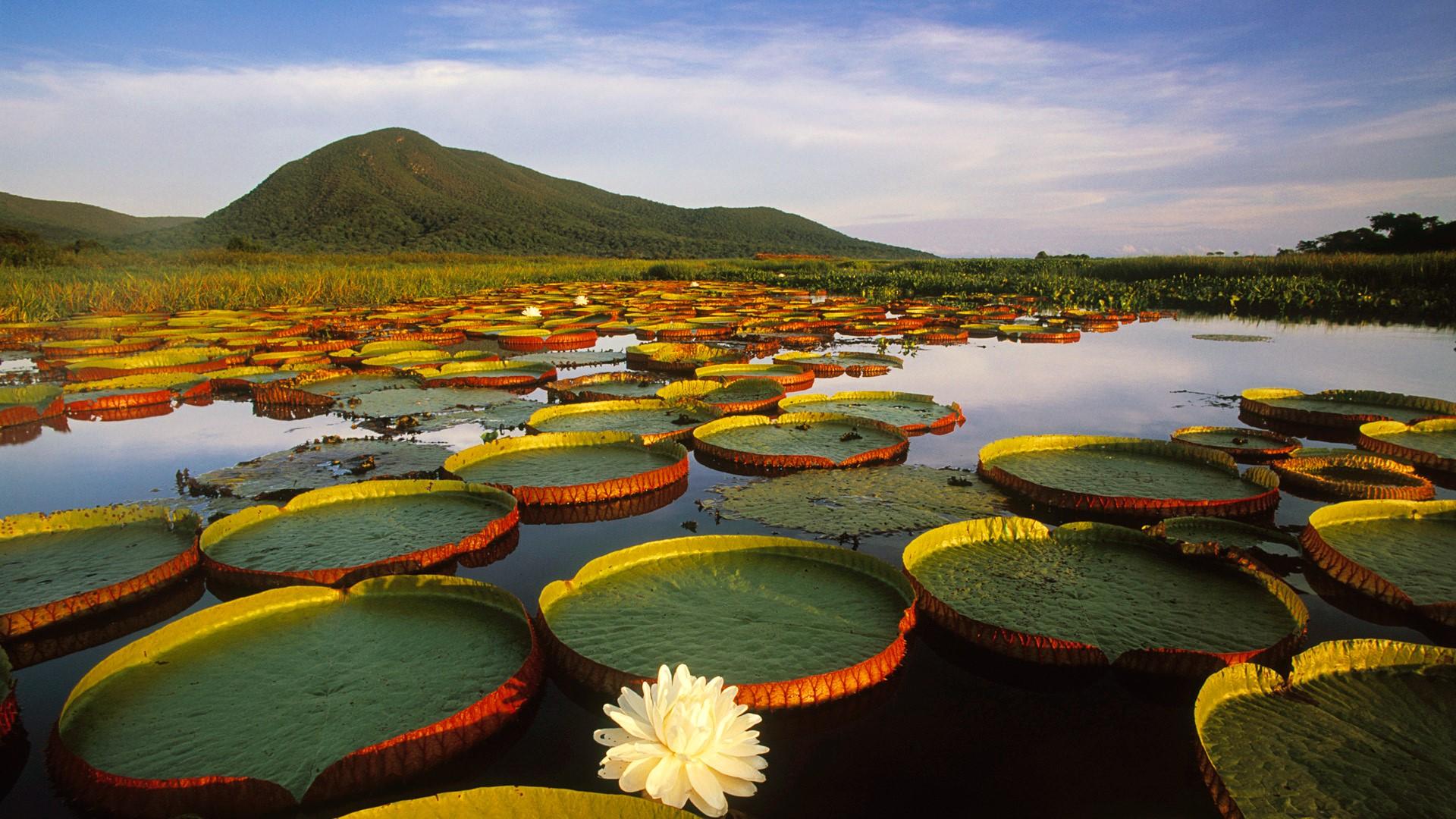 El Pantanal al Sur de Brasil