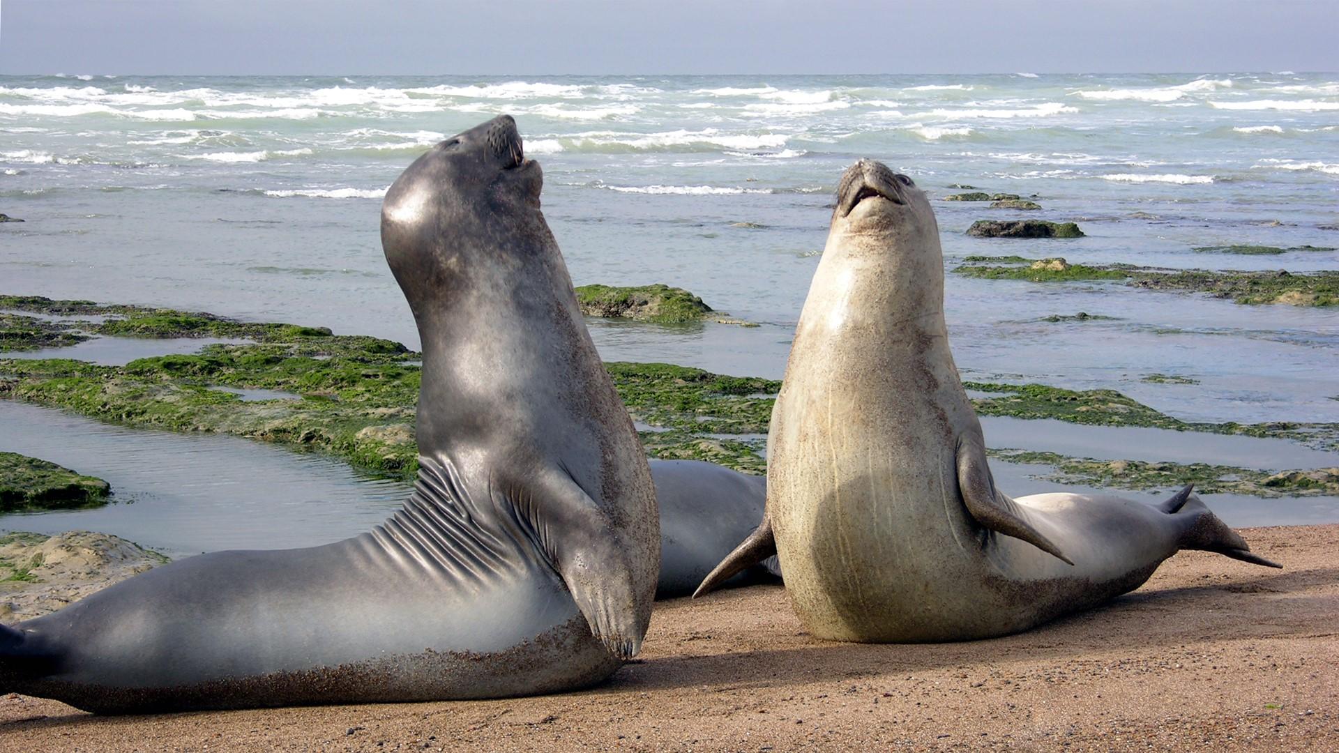 Fauna de la Península Valdés