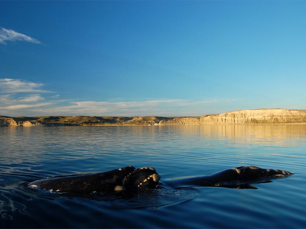 Photographier les baleines à Péninsule Valdes