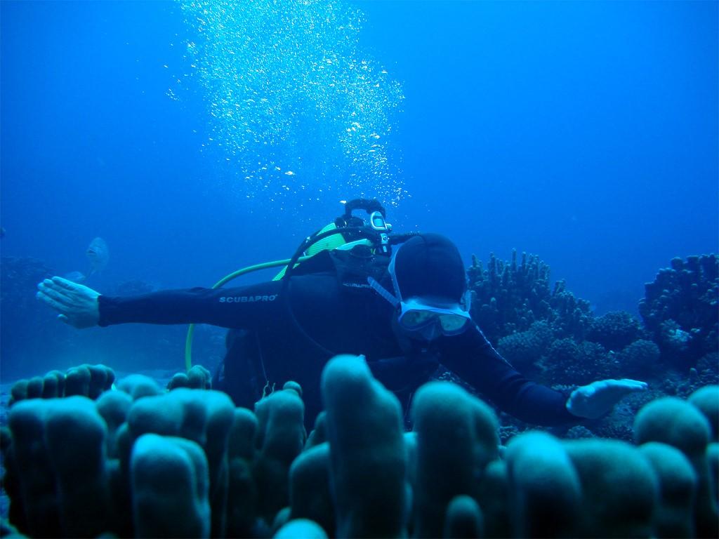 Buceo de ambiente, Isla de Pascua en Chile