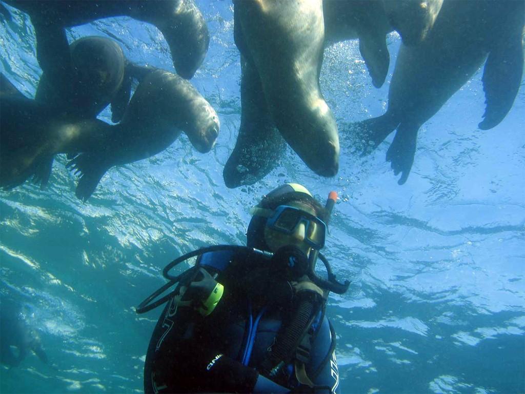 Buceo entre leones marinos y leones marinos en la Patagonia