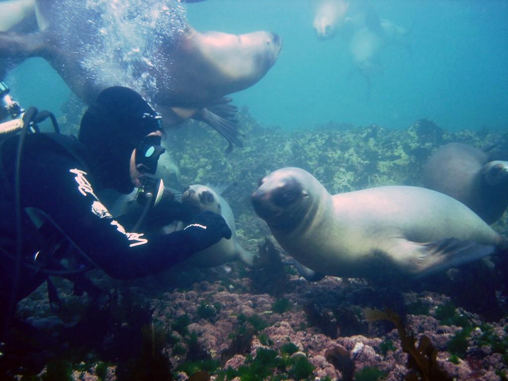 Plongée sous-marine à Puerto Madryn