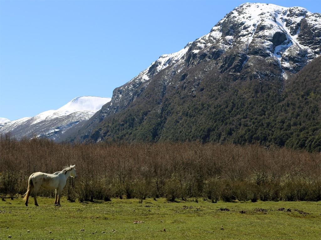 Cabalgatas en La Patagonia