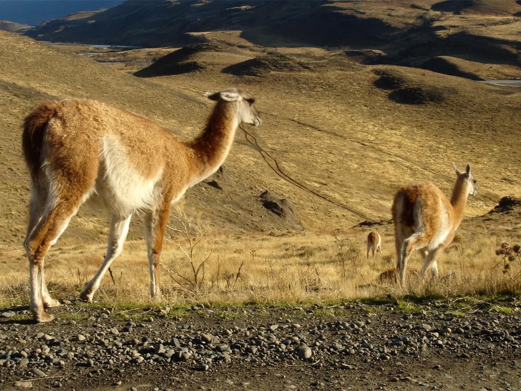 Cabalgatas en la Patagonia chilena
