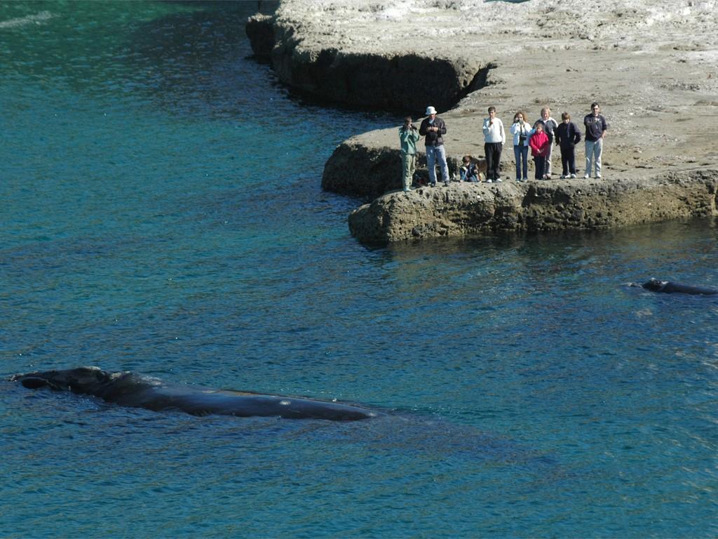 Observer les baleines depuis Puerto Pyramides à Péninsule Valdes