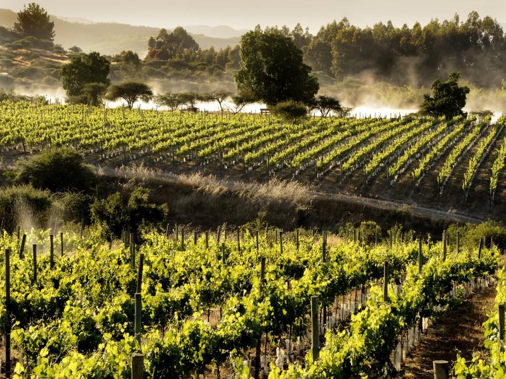 Vignes de la vallée de Colchagua au Chili