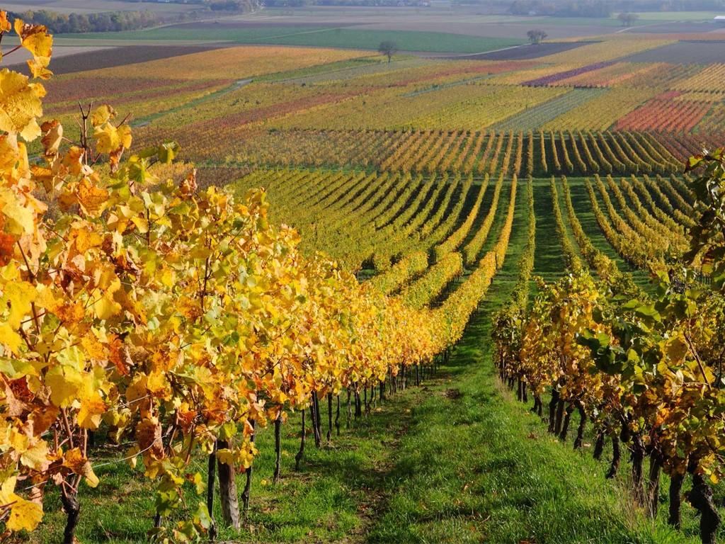 Les vignobles de la vallée Colchagua au Chili